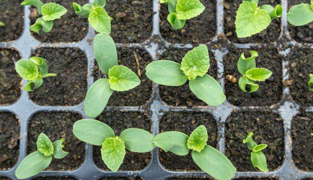 Wysiew nasion - poznaj wiosenne prace w ogrodzie