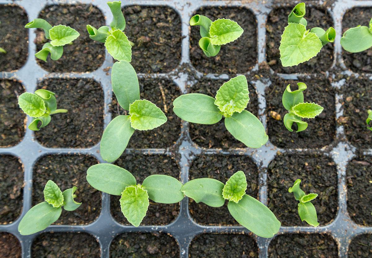 Wysiew nasion - poznaj wiosenne prace wogrodzie
